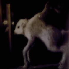 Canes Venatici